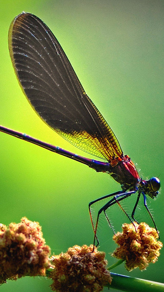Wallpaper collection for android phone - Free dragonfly wallpaper for android ...