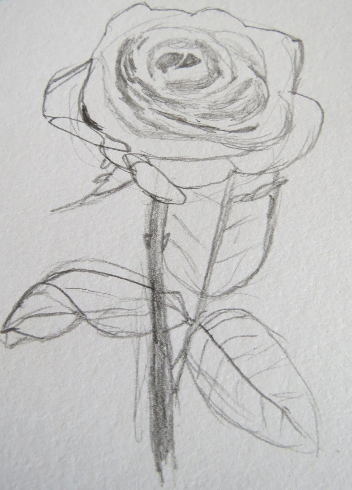 the autistic naturalist how to draw roses valentine u0027s day special