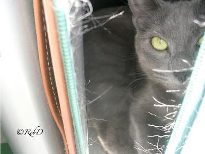 Trasig resväska med vilande katt i. foto: Reb Dutius