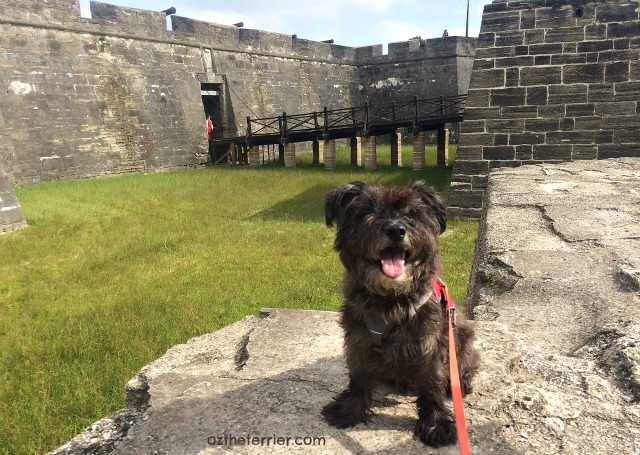 Oz the Terrier with entrance to Castillo de San Marcos in background