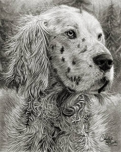 16-Charles-Black-Hyper-Realistic-Pencil-Drawings-of-Dogs-www-designstack-co