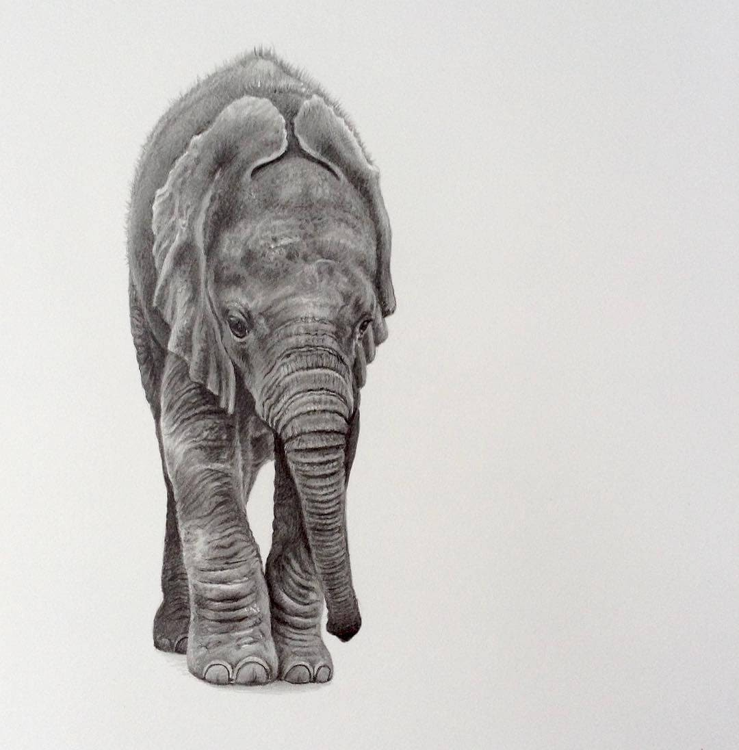 04-Baby-Elephant-Julie-Rhodes-Color-Pencil-Wild-Animal-Drawings-www-designstack-co
