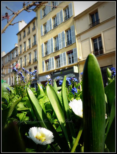 Spring in Versailles
