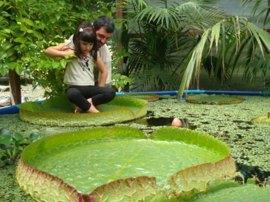 Fundaci n sales el jard n bot nico de vigo vigopeques for Plantas de un jardin botanico