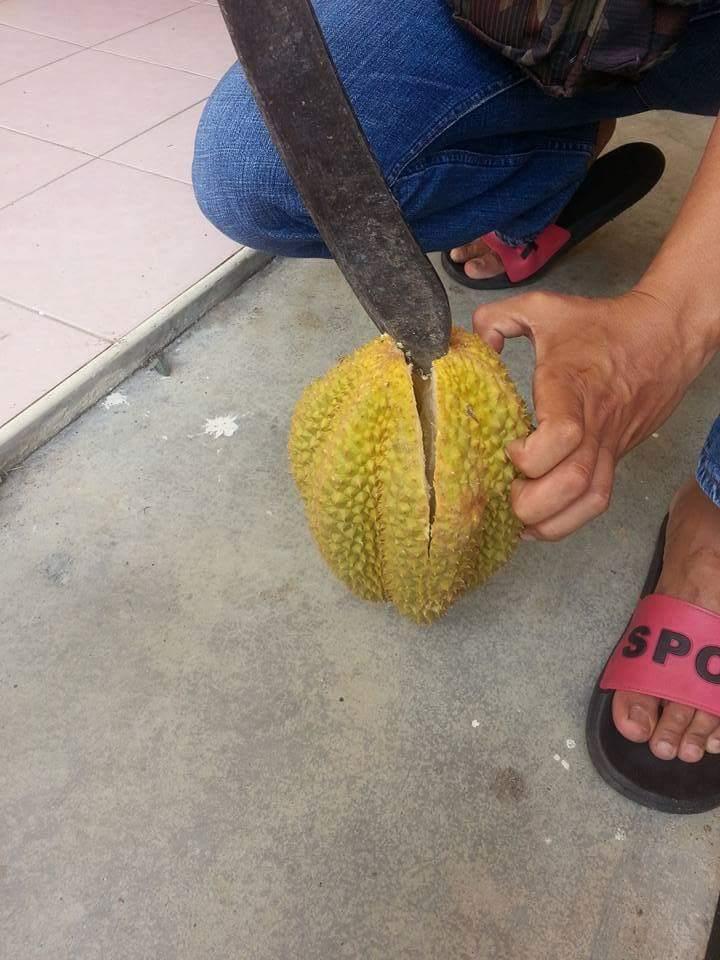 Beli Durian Sekilo Rm7, Tapi Hasilnya?