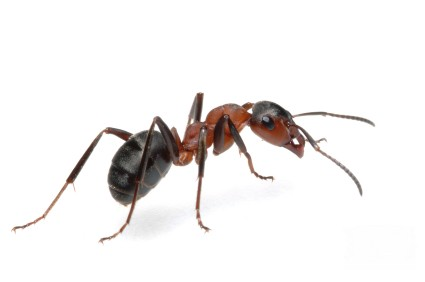 تفسير حلم رؤية الصراصير والنمل في المنام موسوعة المعرفة