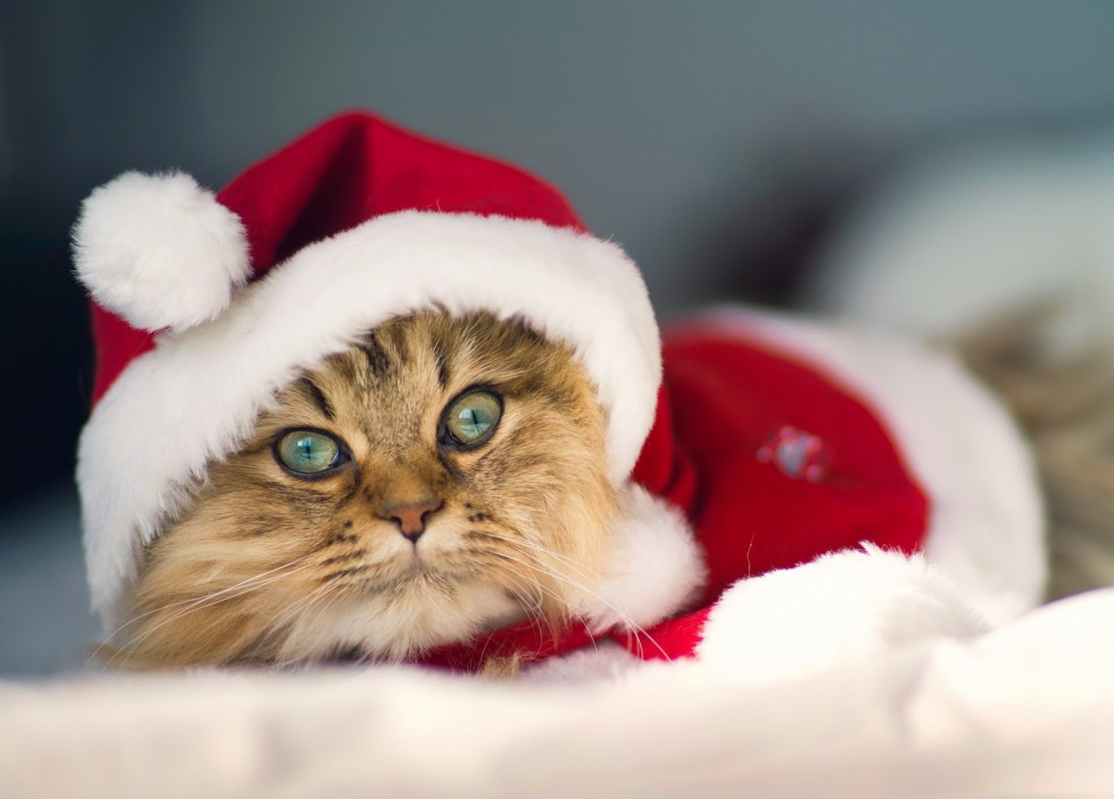 Merry Christmas Images Cute Cats Dressed In Santa Hat Costume