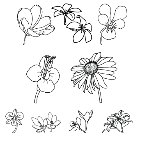 Different Types Of Flowers Drawn