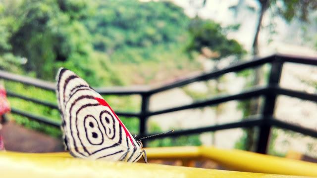 A borboleta 88. Cataratas do Iguaçu, lado brasileiro.