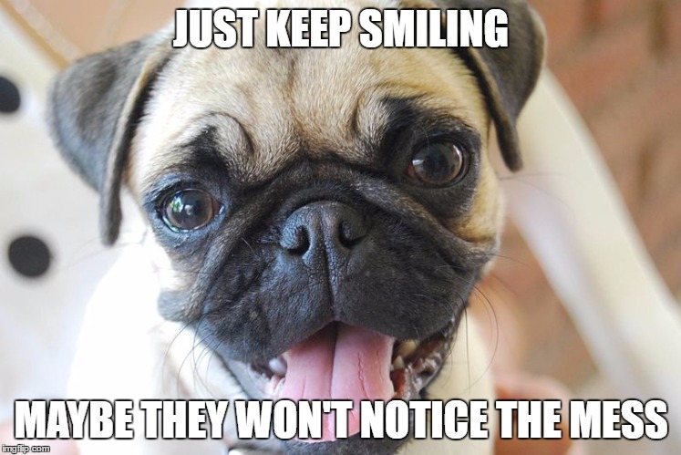 37 pug memes you ll love daily focal