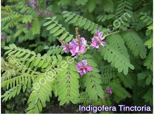 Kirpal Export Overseas-Natural Henna Manufacturers: Indigo ...