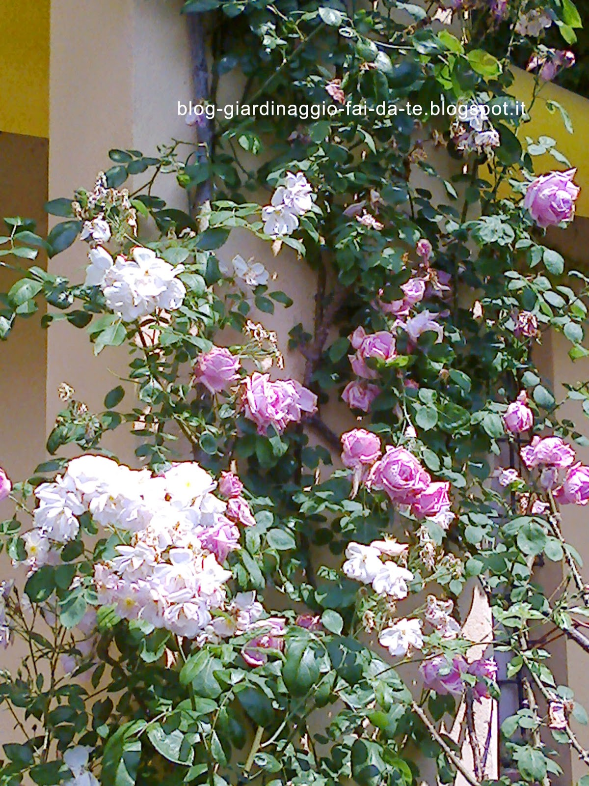 Immagini di giardini fioriti for Giardini fai da te foto