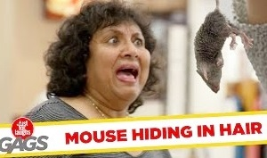 Funny Video – Mouse Hidden in Woman's Hair – Just For Laughs Gags
