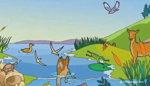 Apa Itu Ekosistem Ini Pengertian Lengkapnya Komponen Macam