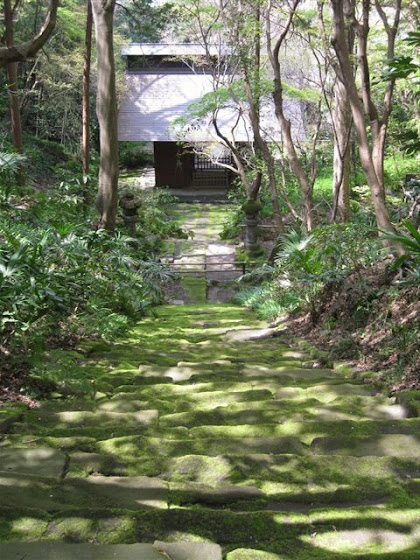 妙法寺苔の石段