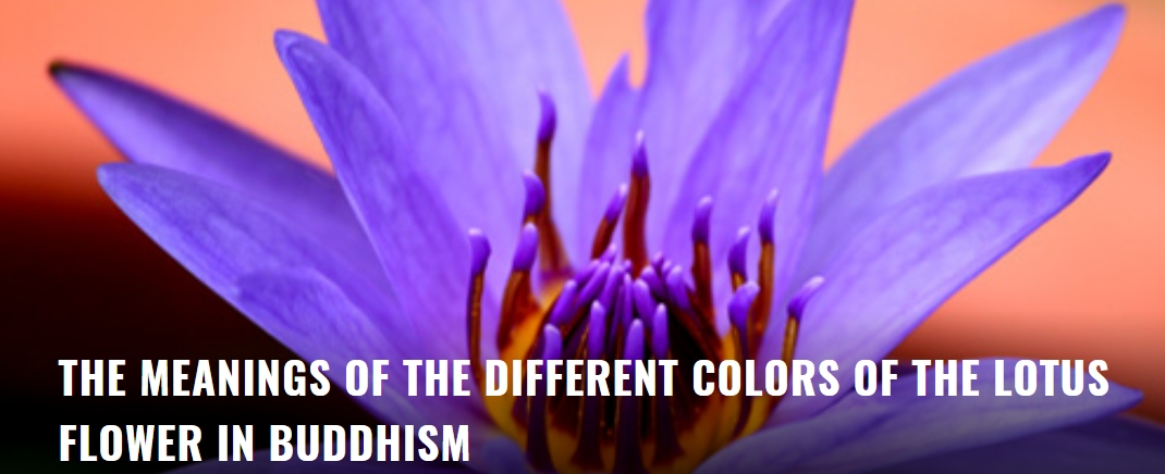 the meanings of the different colors of the lotus flower the lotus flower has eight petals which correspond to the eightfold path of good law it is one of the most common symbols of buddhism and represents the mightylinksfo