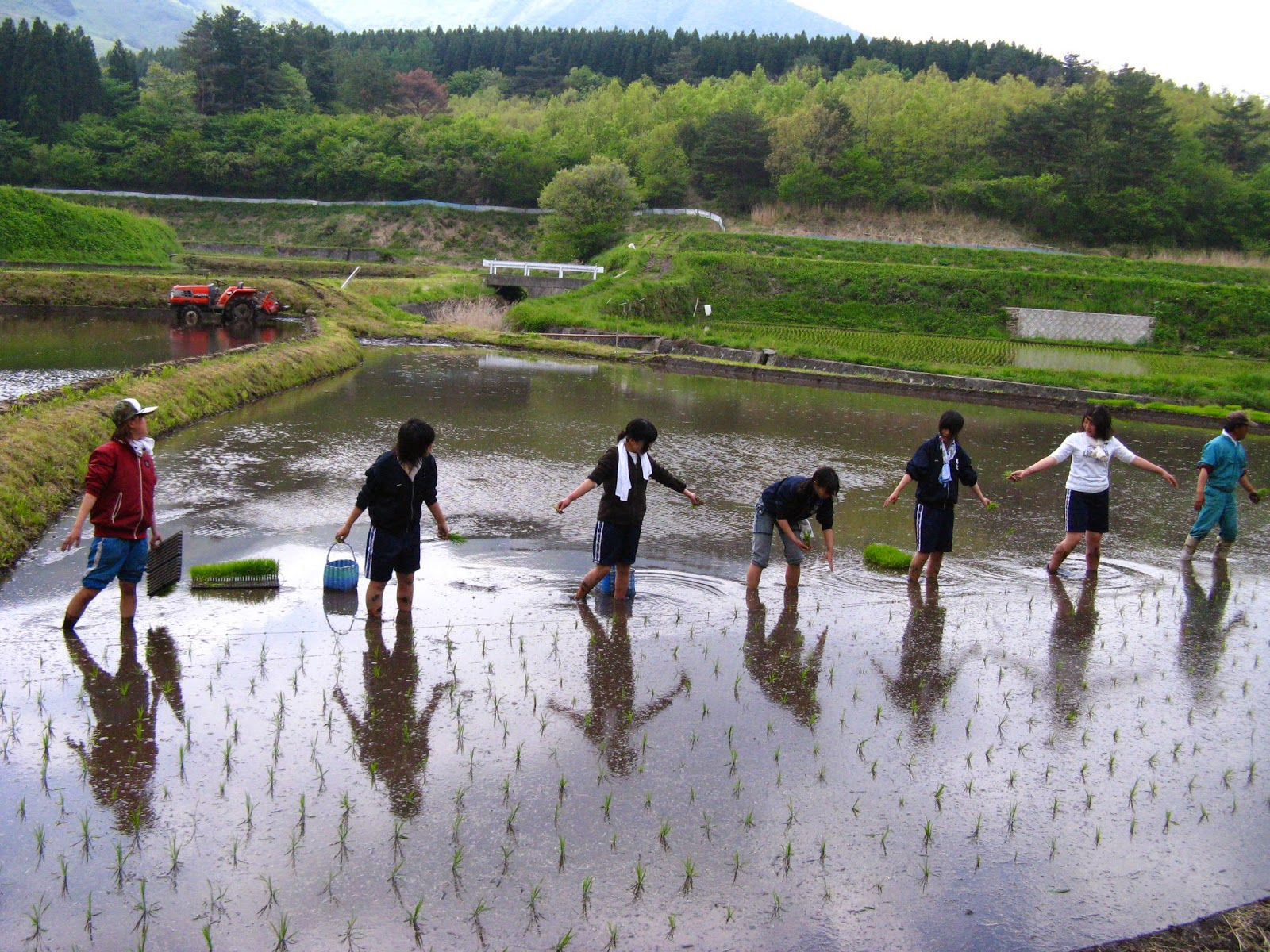 WWOOF Japan rice planting
