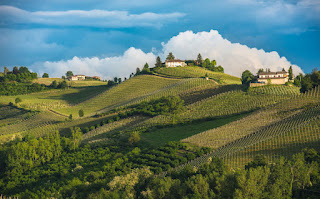 Vineyards of Langhe in Piedmont