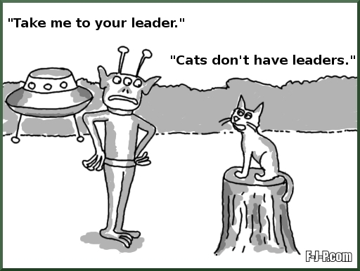 Take me to your leader - Cats don't have leaders
