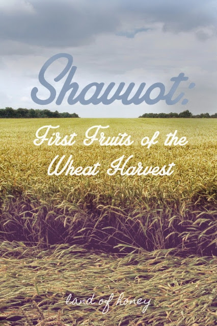 Shavuot: First Fruits of the What Harvest | Land of Honey
