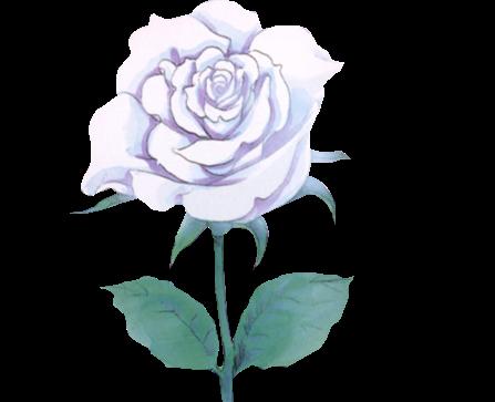 PNG #27 Rosa Blanca