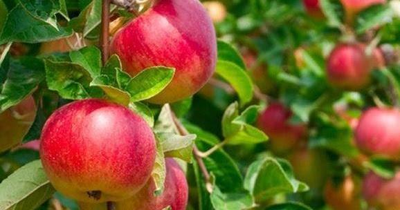 Harga Berbagai Macam – Superfood – Cuka Apel Tahesta & Nutrigreat
