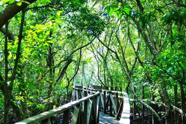Hutan Bakau Margomulyo Balikpapan