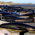 People Race To Save 400 Whales Washed Ashore In New Zealand (Photo)