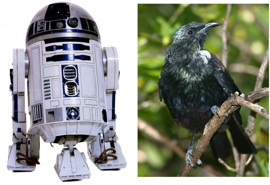 geek with curves: The bird that sounds like R2-D2