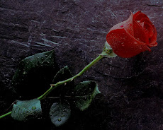 Red Rose with Thorns