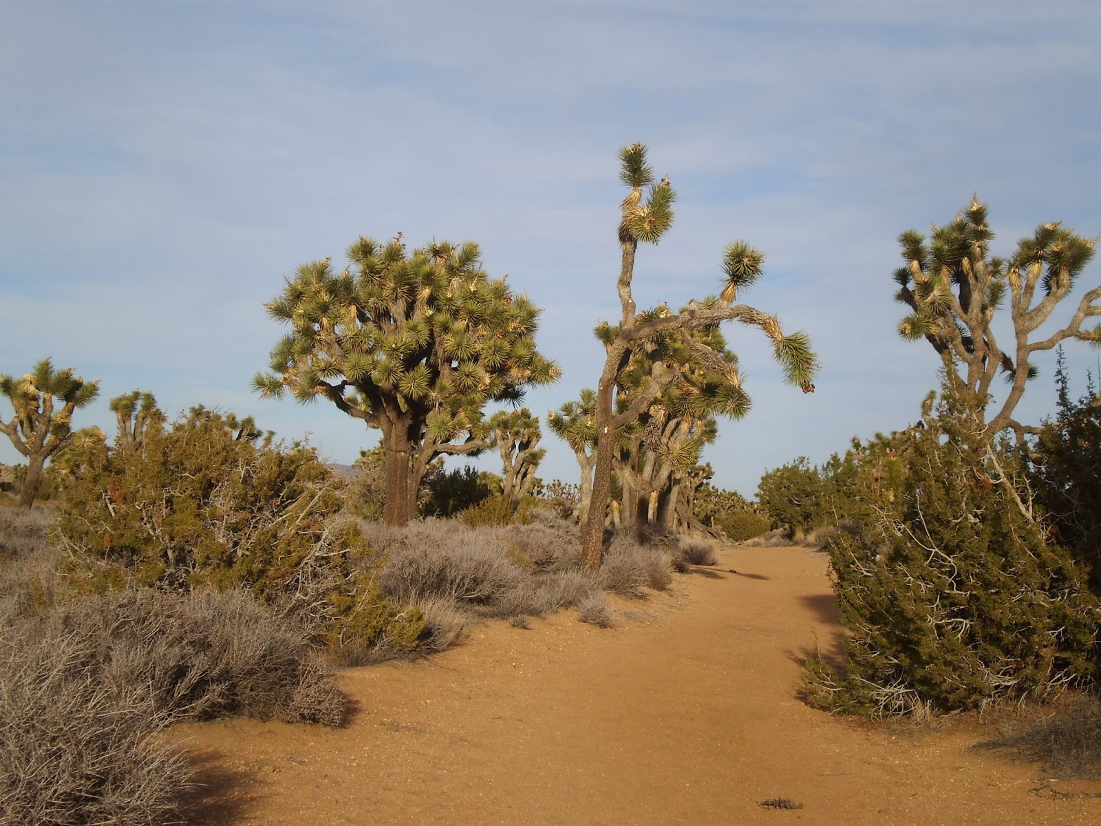 The Downhill Side Backpacking In Joshua Tree National Park