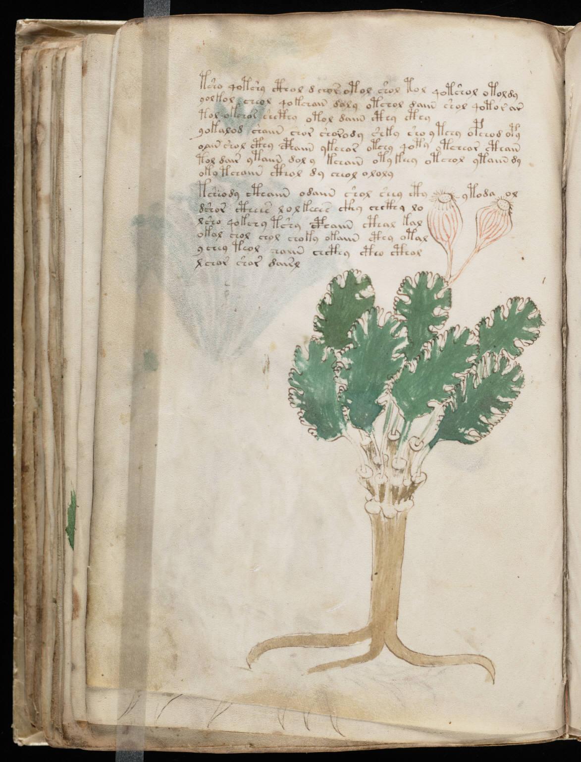 manuscrito086