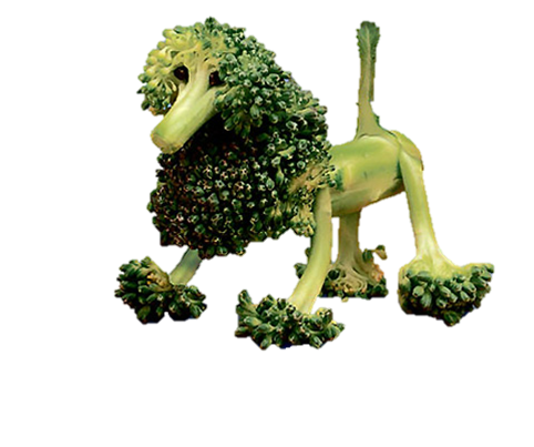 Green broccoli that is carved like a poodle dog