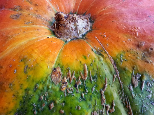 Pumpkin Detail [enlarge]