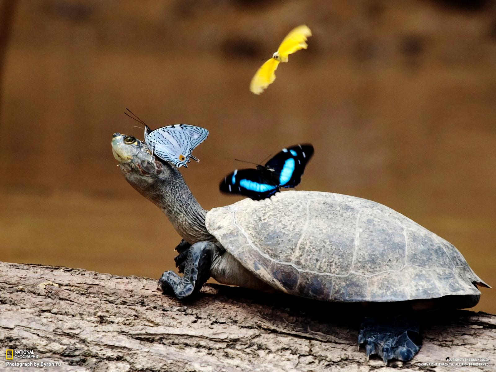 wallpaper funny turtle rain - photo #27