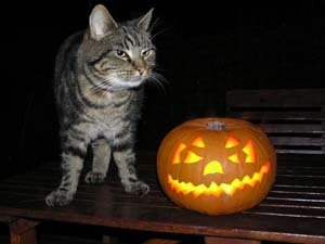 The IPKat: Halloween Horrors: It came from the USPTO.....