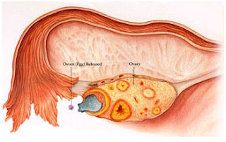 http://kasturihospitals.com/gynaecology/ovulation-induction/index.html