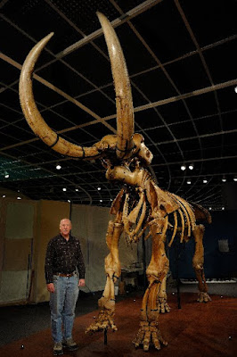 Mastadon bones mistaken for bones of a race of Giants.