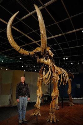 Mastadon bones mistaken for bones of a race of Giants.