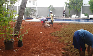 Jasa Pembuatan Taman Kolam Renang di Bogor