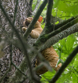 Image of OrangeJello clinging to tree trunk crying