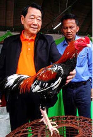 Ayam Bangkok Juara Bersama Milyuner Mania Adu Ayam AYAMBANGKOKVIP