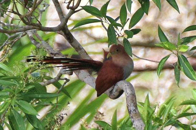 Pájaro de colores en Gamboa