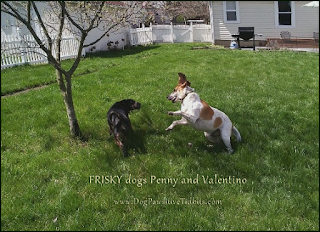 Frisky dogs Penny and Valentino