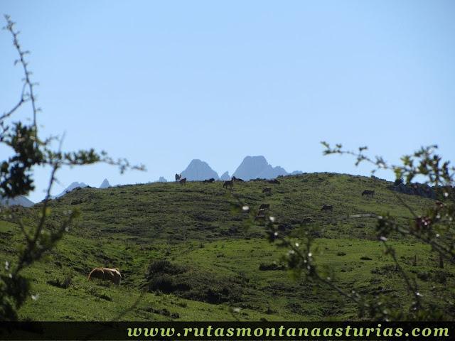 Ruta Lagos de Covadonga PR PNPE-2: Torrecerredo desde el MIrador del Príncipe