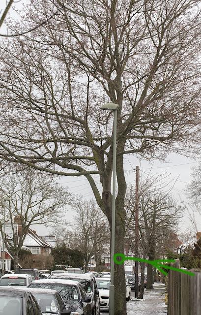 Tree on Bourne Vale, Hayes, 13 January 2017.
