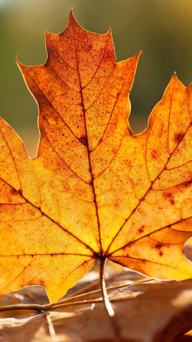 صور وخلفيات صورة ورق شجر فصل الخريف بجودة عالية للتصميم
