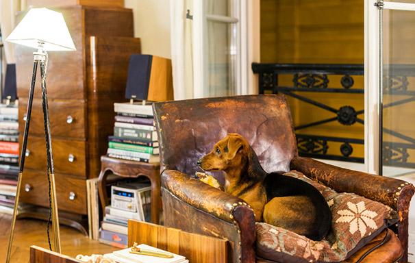 fauteuil club en cuir avec chien et lampe tripode chinée