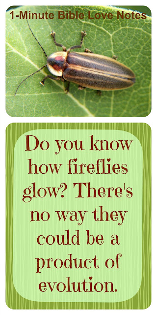 Look at the Firefly and Praise Our Creator for His Genius and Beauty