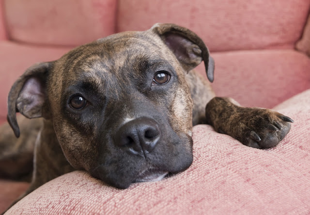 Eight tips to help fearful dogs feel safe, including comforting your dog if they would like it
